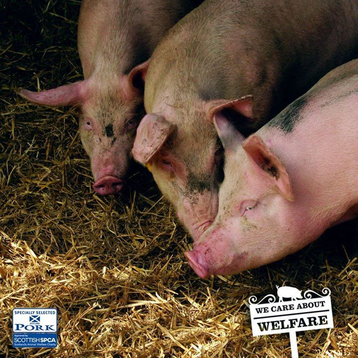 Selected Pork mark stands for whole-life…